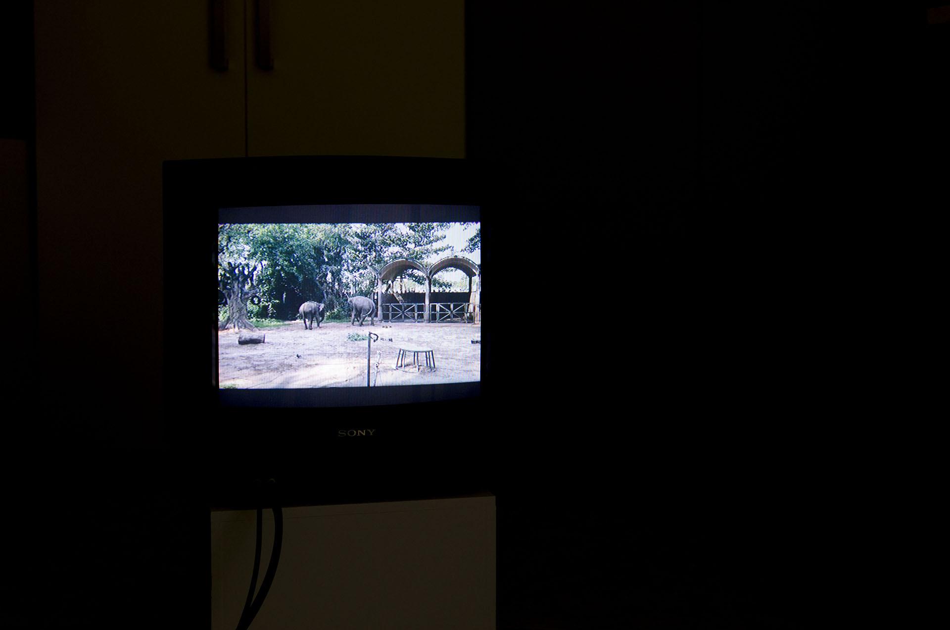 video_perque_tornar_irene_sola
